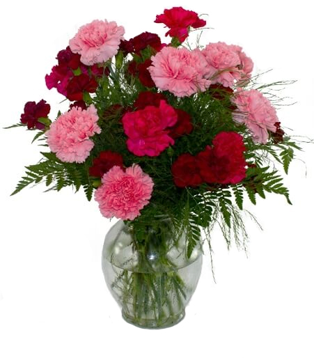 Birthday Flowers for January – Carnations