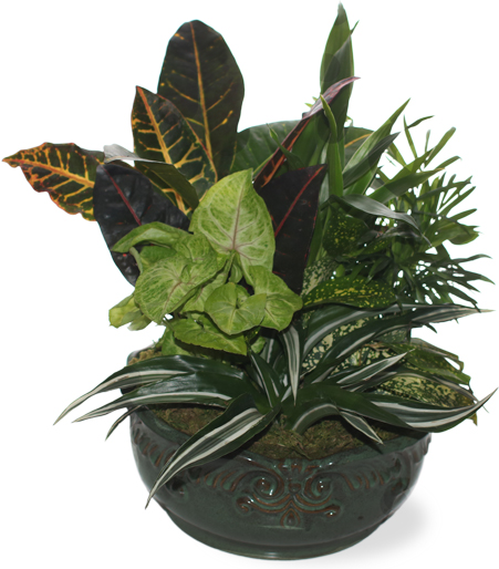 Mixed Plant Dish Garden