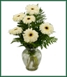 One half dozen gerbera daisies arranged in clear glass. Shown in white, but color may vary.