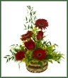 Show the strength of your love and affection with this harmonious arrangement of deep red roses and gerbera daises contrasting yellow solidago and delicate, decorative greens. Appropriate for any occasion including Birthday, Anniversary and Love and Romance.