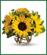 Whoever receives this stunning bouquet is sure to be bowled over by its bold beauty! It's big on fun and big on flowers. Orange spray roses, yellow sunflowers, curly willow and salal are arranged in a charming ball vase. Order it now to send a ton of sun.